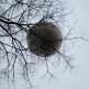 002 Turin Eye (Piazza Borgo Dora Torino) 30 Nov 2012_774x518